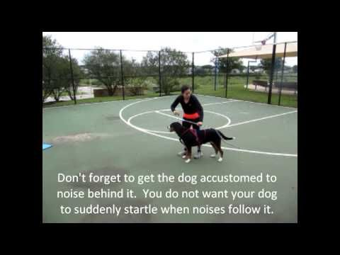 Teaching your dog to cart / draft (Greater Swiss Mountain Dog) - YouTube