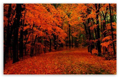 Fall Lights Desktop Wallpaper Fall Fall Wallpaper Fall Desktop Backgrounds