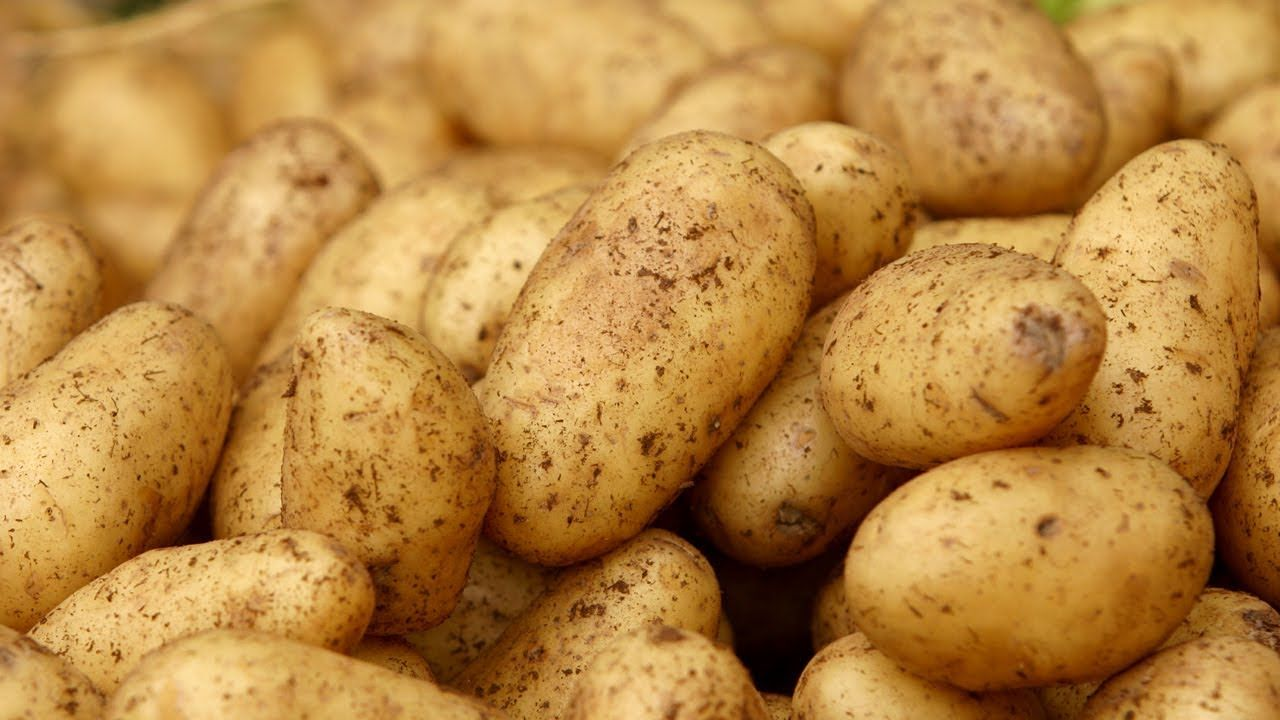 How to grow potatoes anywhere at home with p allen
