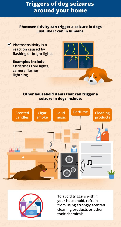 Dog Seizures Triggers Causes Treatments Dog Seizures