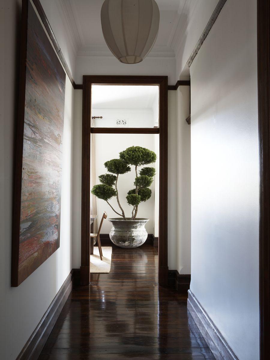 Darlinghurst Apartment / Mr Waller. Indoor Tree | Residential ...