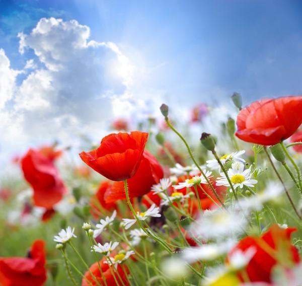 Tamara On Twitter Flower Wallpaper Beautiful Flowers Wallpapers Summer Flowers