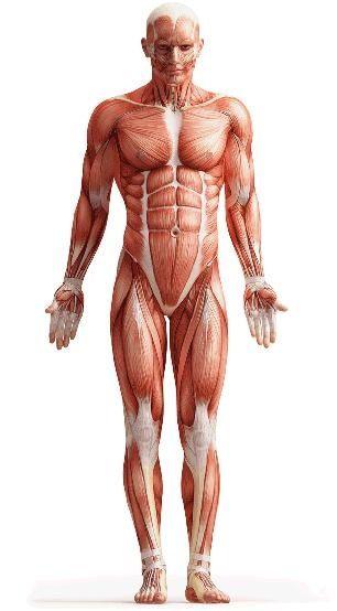 Posición Anatómica; Es la postura erguida de pie, con los brazos ...