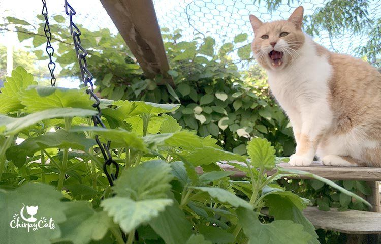 A Cat Safe Garden Of Non Toxic Plants Your Cats Will Love Cat Safe Plants Cat Garden Pretty Cats