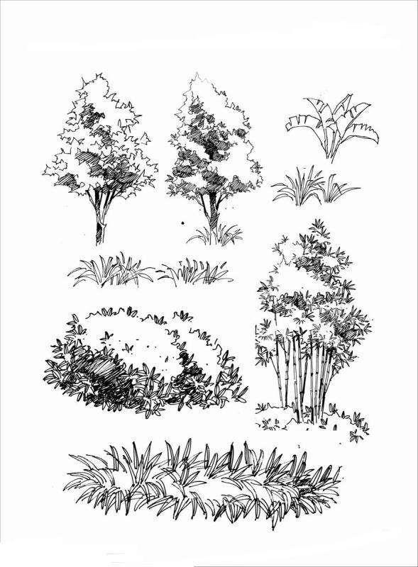 Картинки кустарников для срисовки