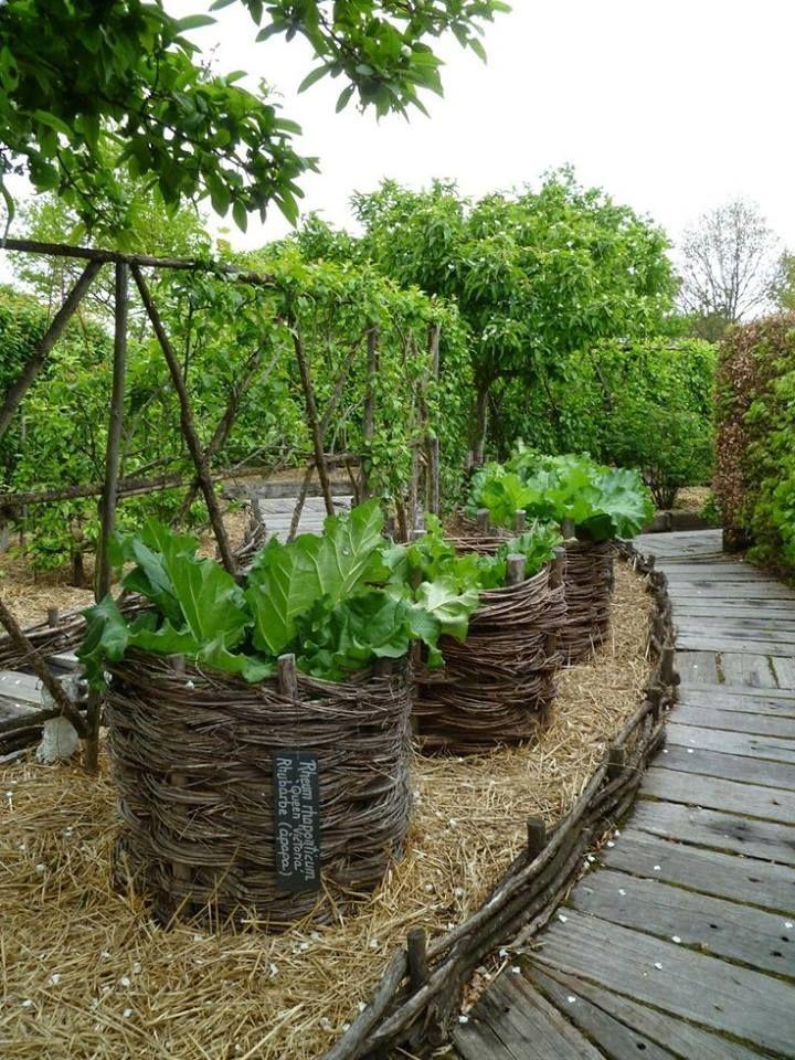 Aquaponics Jetzt Konnen Sie Ganz Einfach Ihr Eigenes Gemuse Anbauen Leben Ideen Garten Hochbeet Garten Pflanzen Garten