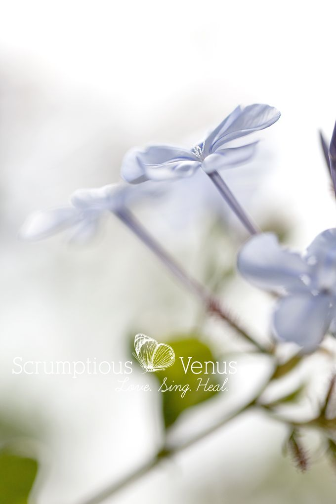 """<3 """"Expect to see beauty in your life."""" <3 #Wisdom #FlowerTherapy   #Quote http://www.scrumptiousvenus.com"""