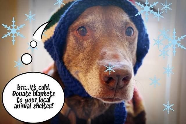 Donate Old Blankets And Towels To Your Local Animal Shelter Animal Shelter Animals Old Towels