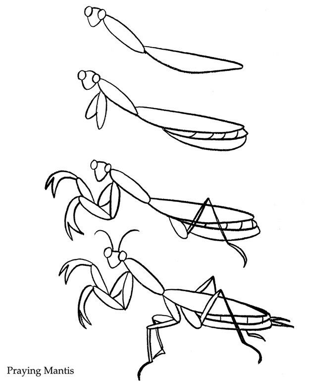 Praying Mantis How To Draw Insects Drawing Techniques Praying
