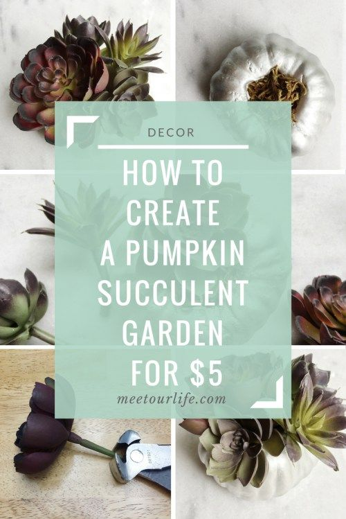 Are you looking for an easy fall farmhouse DIY?  Then try out this pumpkin succulent garden to get the fixer upper look.  Click through or repin for later.  www.meetourlife.com