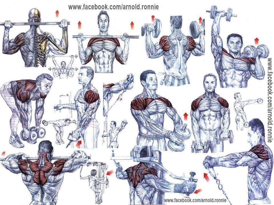 All Body parts workout chart www.healtheeme.com | Health