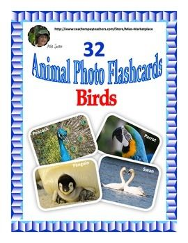 This file contains 32 beautifully crafted bird flashcards. They can be used for vocabulary development, speech and language activities, as descriptive writing visual prompts, and for a variety of life science activities. These photo flashcards show the birds in their natural habitat and are great for identifying adaptations.
