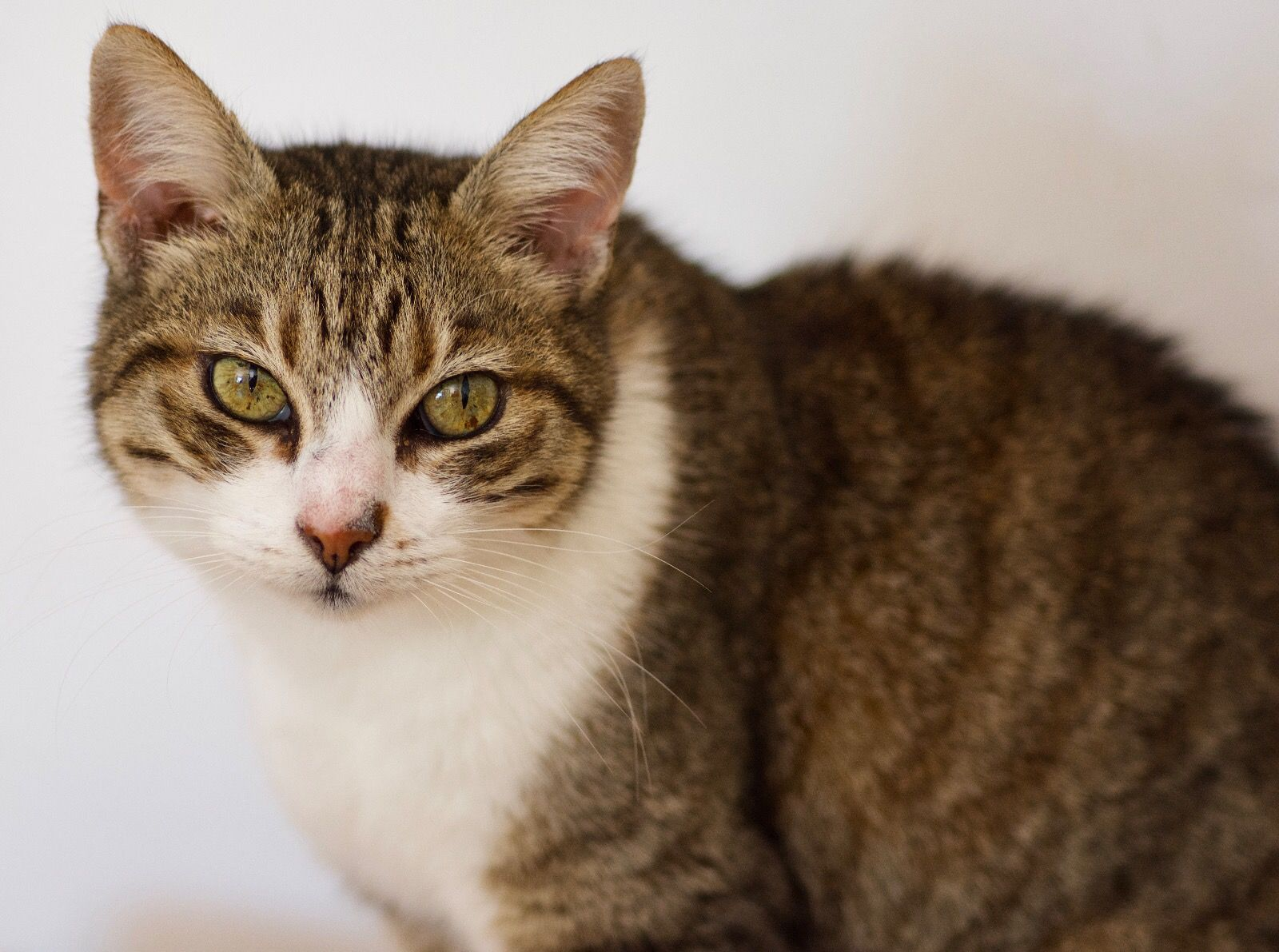 Wonderful Wednesday 26 Orange tabby cats, Cats, Super