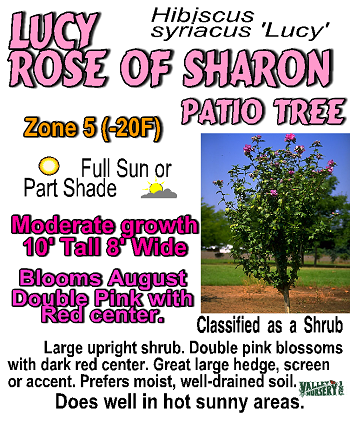 Nice Example Of A Bench Card Layout Rose Of Sharon Valley
