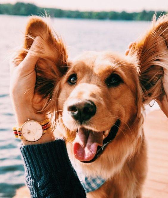 Hunde sind immer für uns da wenn wir sie brauchen Hunde sind immer für uns da wenn wir sie brauchen