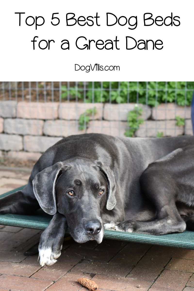 What Is The Best Dog Bed For A Great Dane With Reviews
