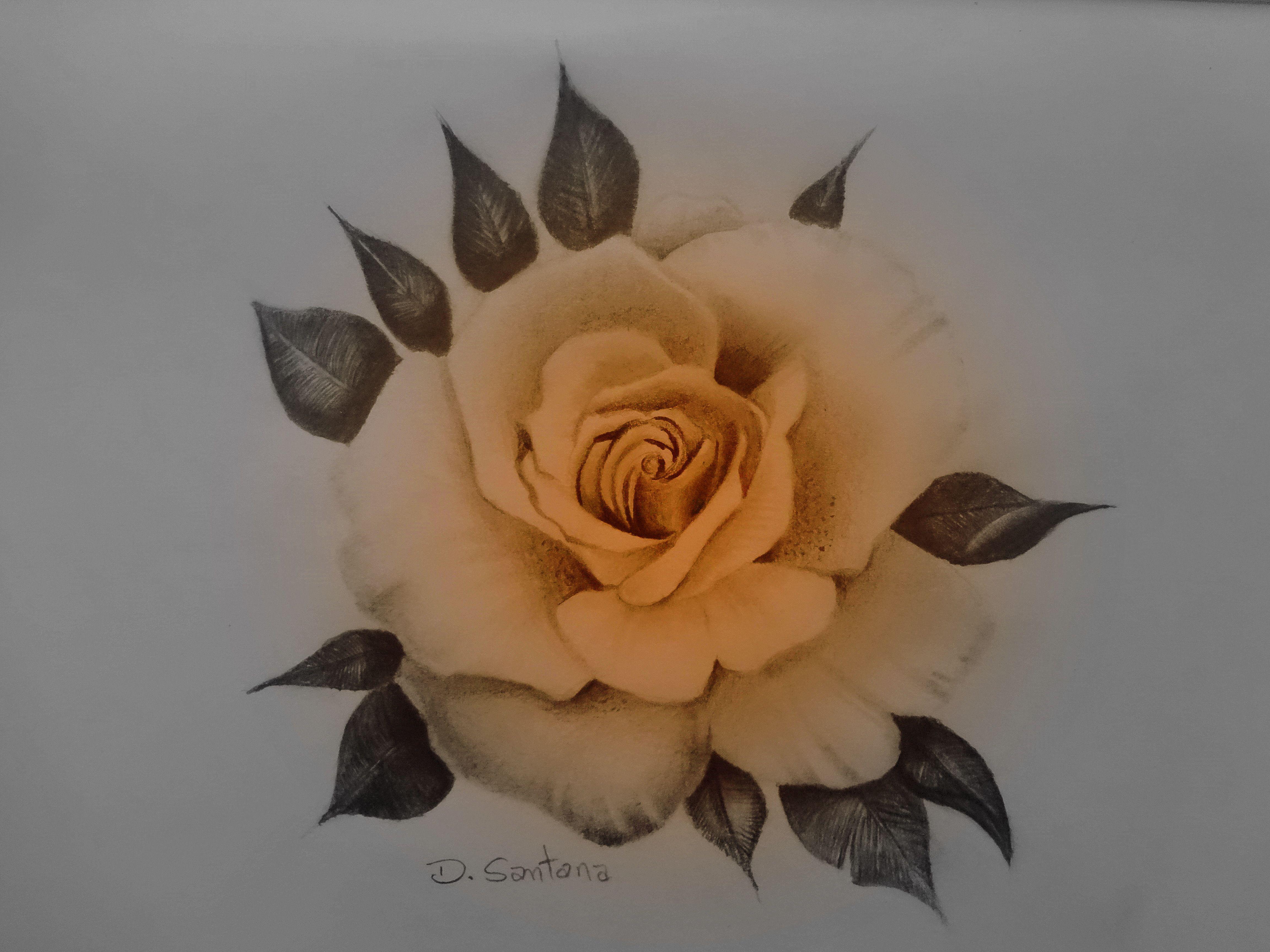 Desenho Realista Rosa Flor Desenho Realista Rosas Desenho