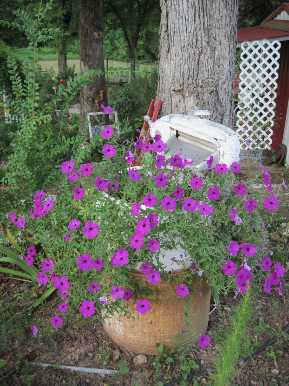 Lowe S Garden Tillers Confessions Of A Serial Tiller Home