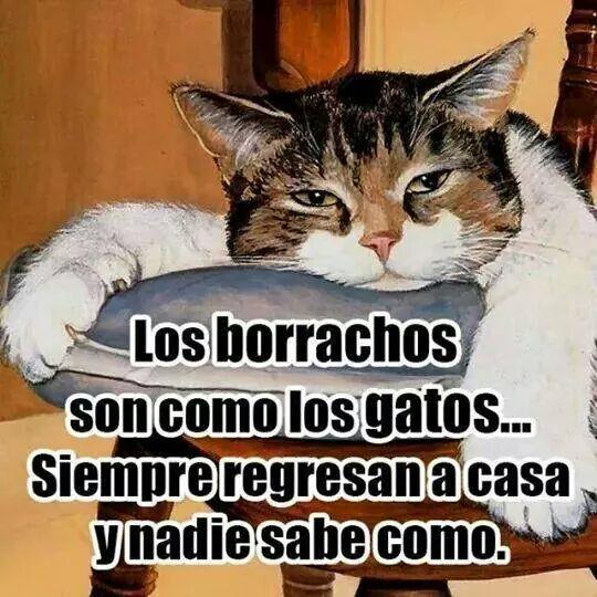 Gatos Y Borrachos Humor Make Me Laugh Cats