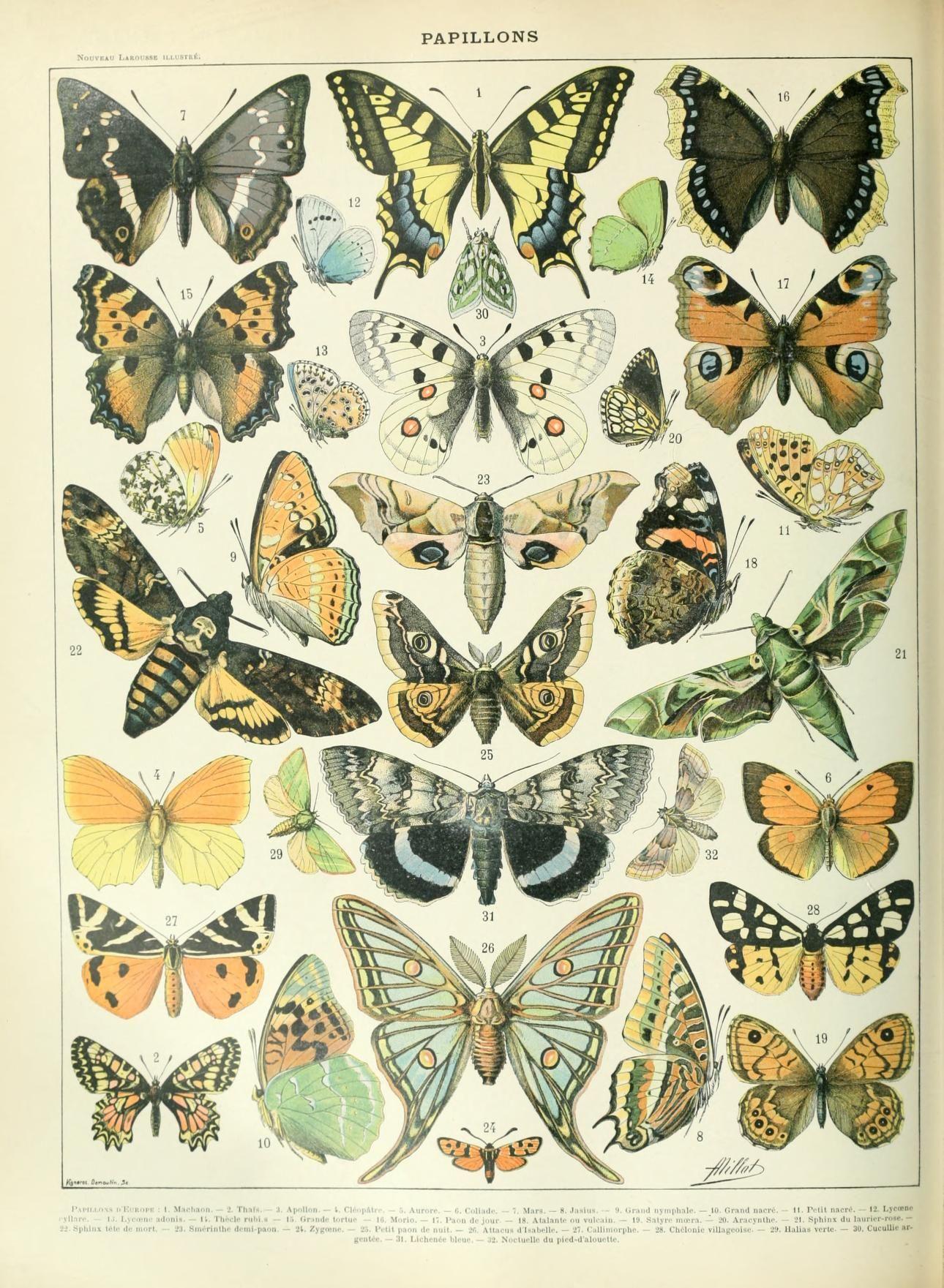 Nouveau Larousse illustré : Papillons