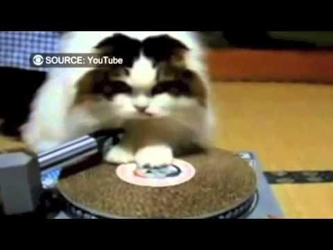 Cat DJ scratching surface.