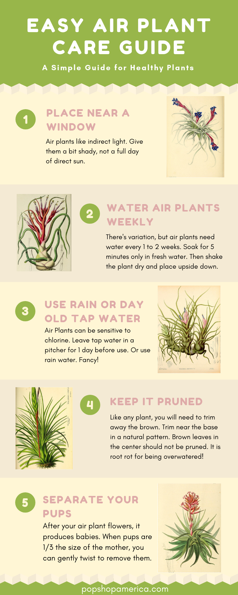 Easy Air Plant Care Guide with Infographics Air plants