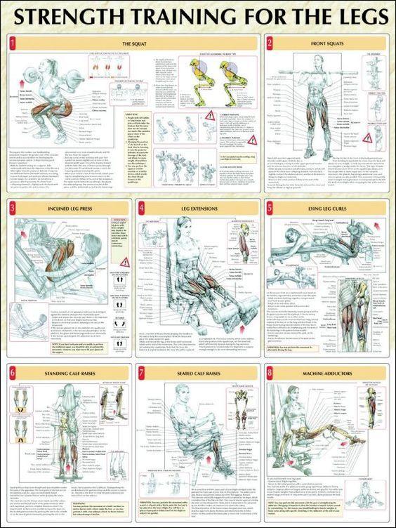 9 Different Butt Workout for Women Anatomy   Pinterest   Strength ...