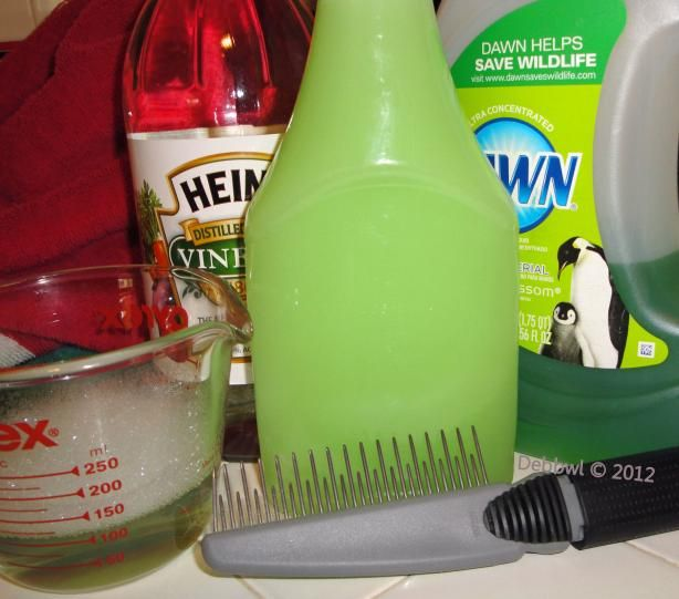 Natural Dog Shampoo Flea Removal Recipe Genius Kitchen