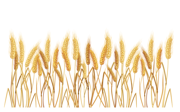 Gallery Recent Updates Clip Art Wheat Drawing Wheat