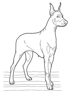 ausmalbild hund in 2020   ausmalbilder hunde, malvorlagen tiere, malvorlagen pferde