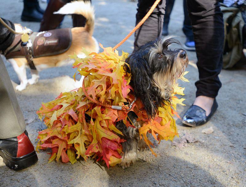 Leaf Pile Hunde Laub