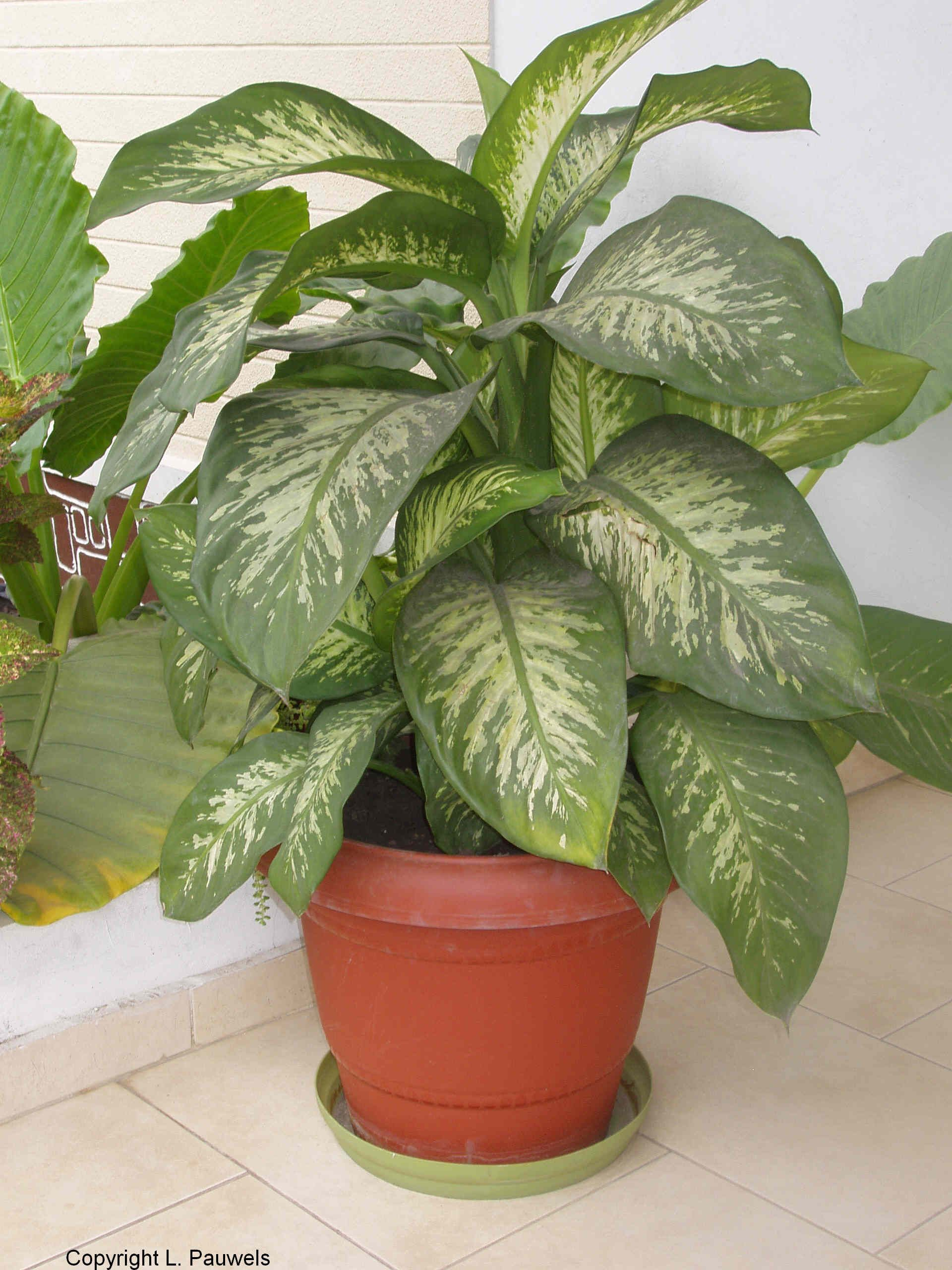 Free Plant Identification Plants Tropical House Plants Deadly