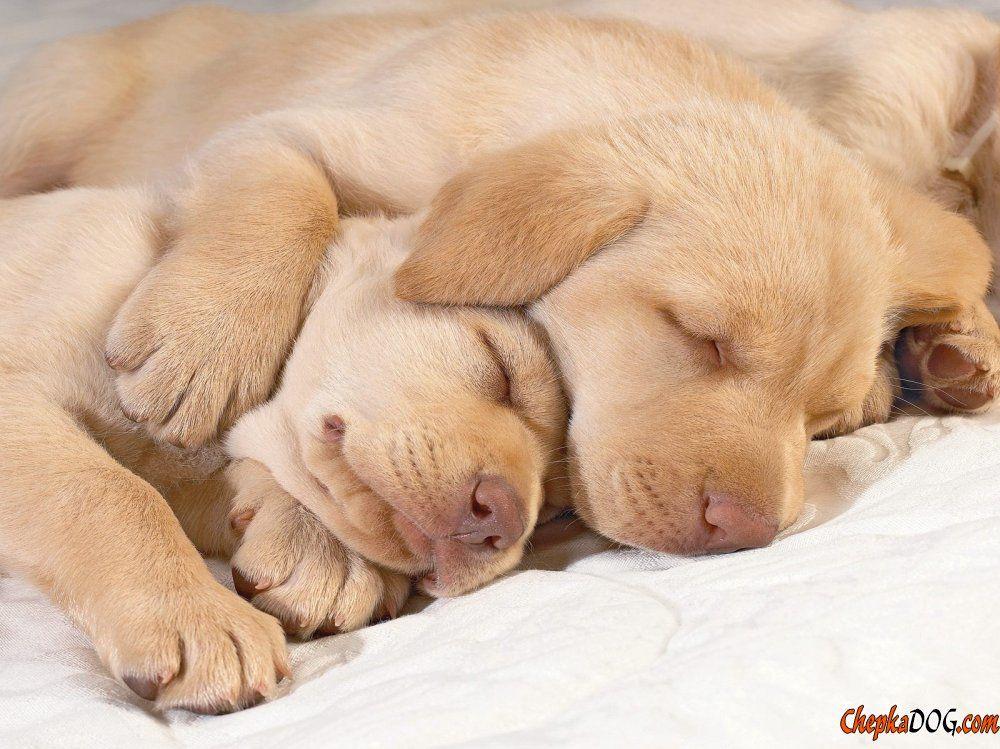 Fotos de perros durmiendo foto