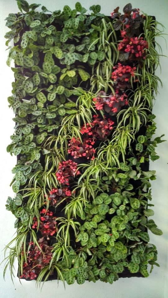 Jardines verticales en quer taro jardiner a pinterest for Jardines verticales en balcones