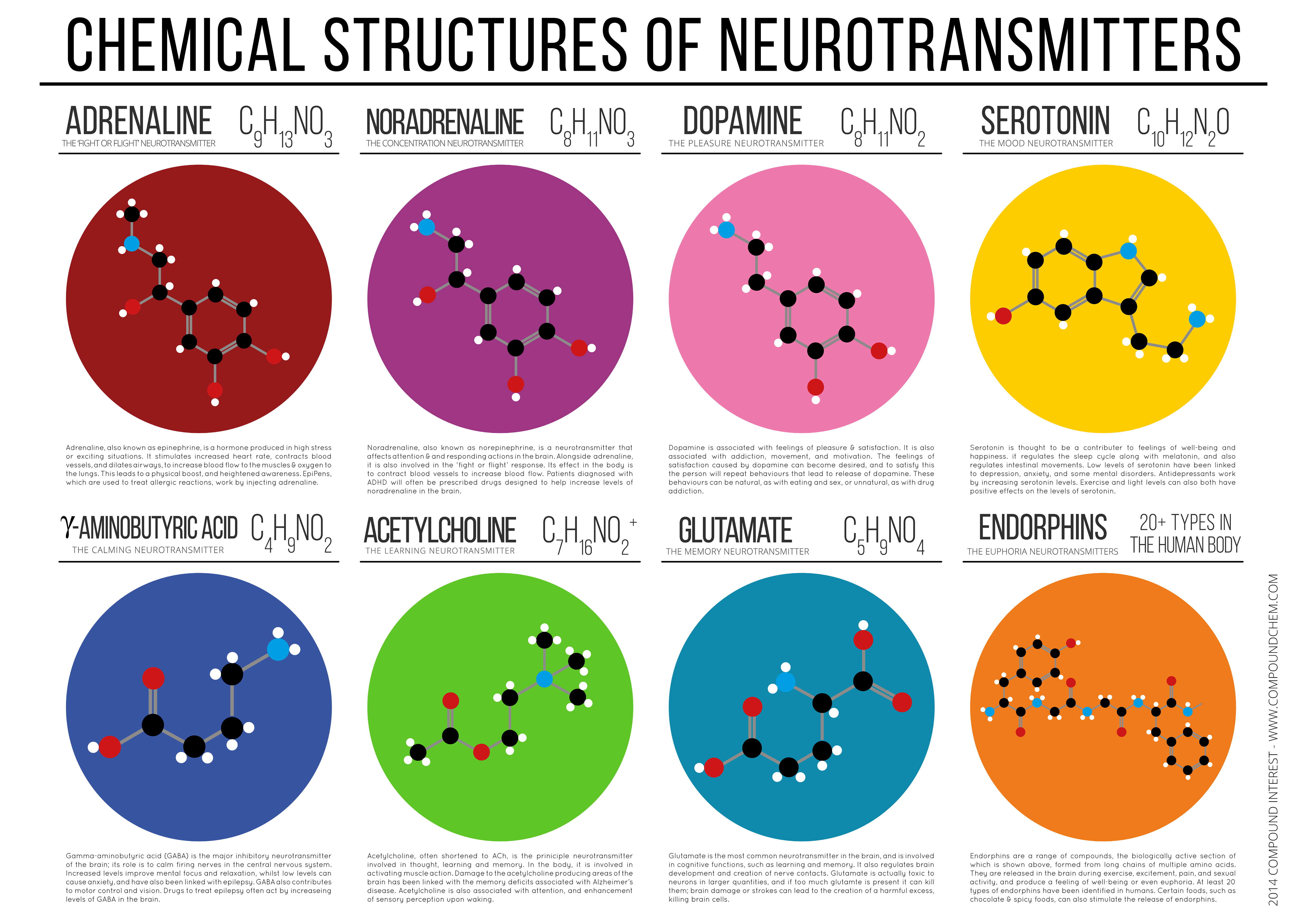 Adhd Drugs Increase Brain Glutamate >> Chemical Structures Of Neurotransmitters Infographic Chemistry