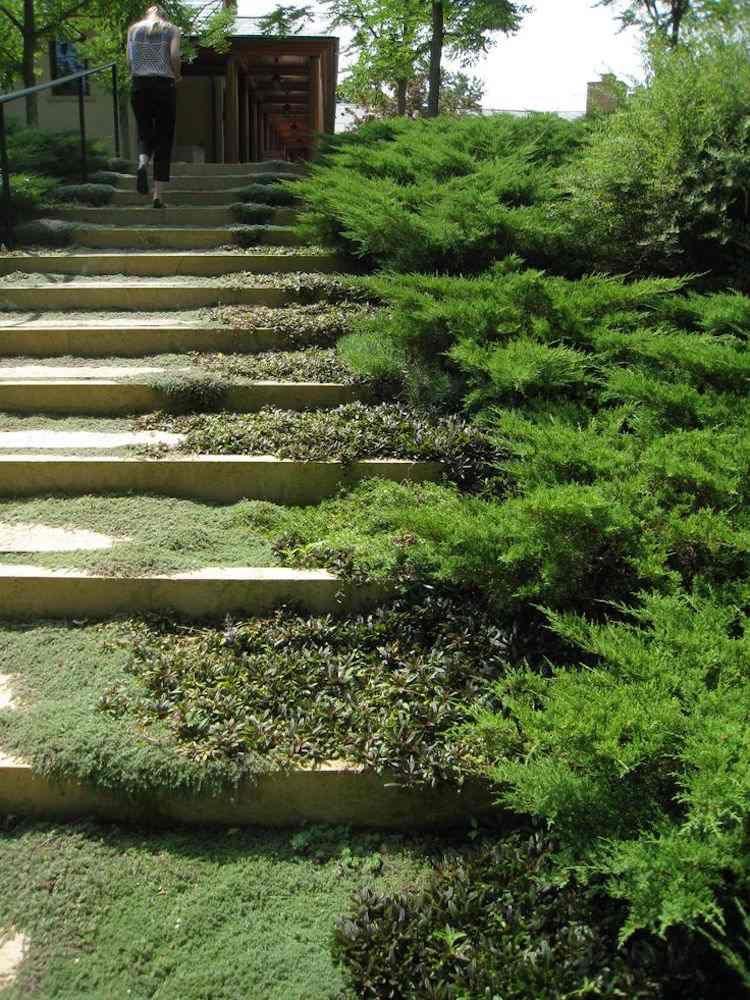 Treppe mit Moos und Bodendeckern begrünen | Garten | Pinterest ...