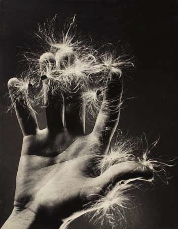 Ruth Bernhard. Untitled (Hand with Dandelion). 1936. S)