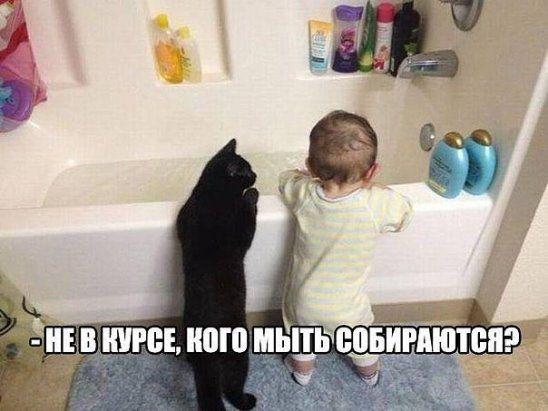 Одноклассники | Смешные фотографии кошек, Смешные фото ...