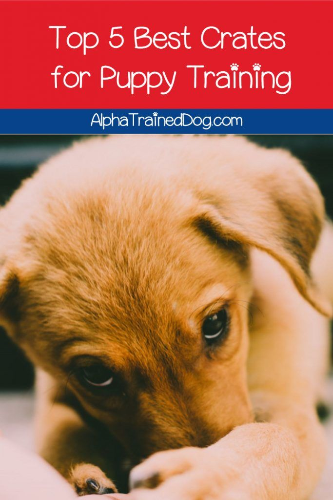 Top 5 Best Crates For Puppy Training In 2020 Puppy Training