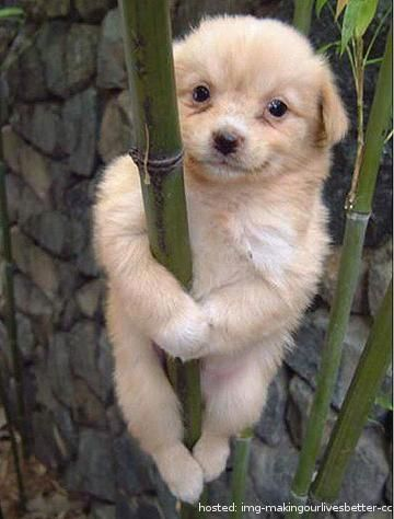 Good Cubby Chubby Adorable Dog - b2408a76a334b040660eaab020359782  Snapshot_414598  .jpg