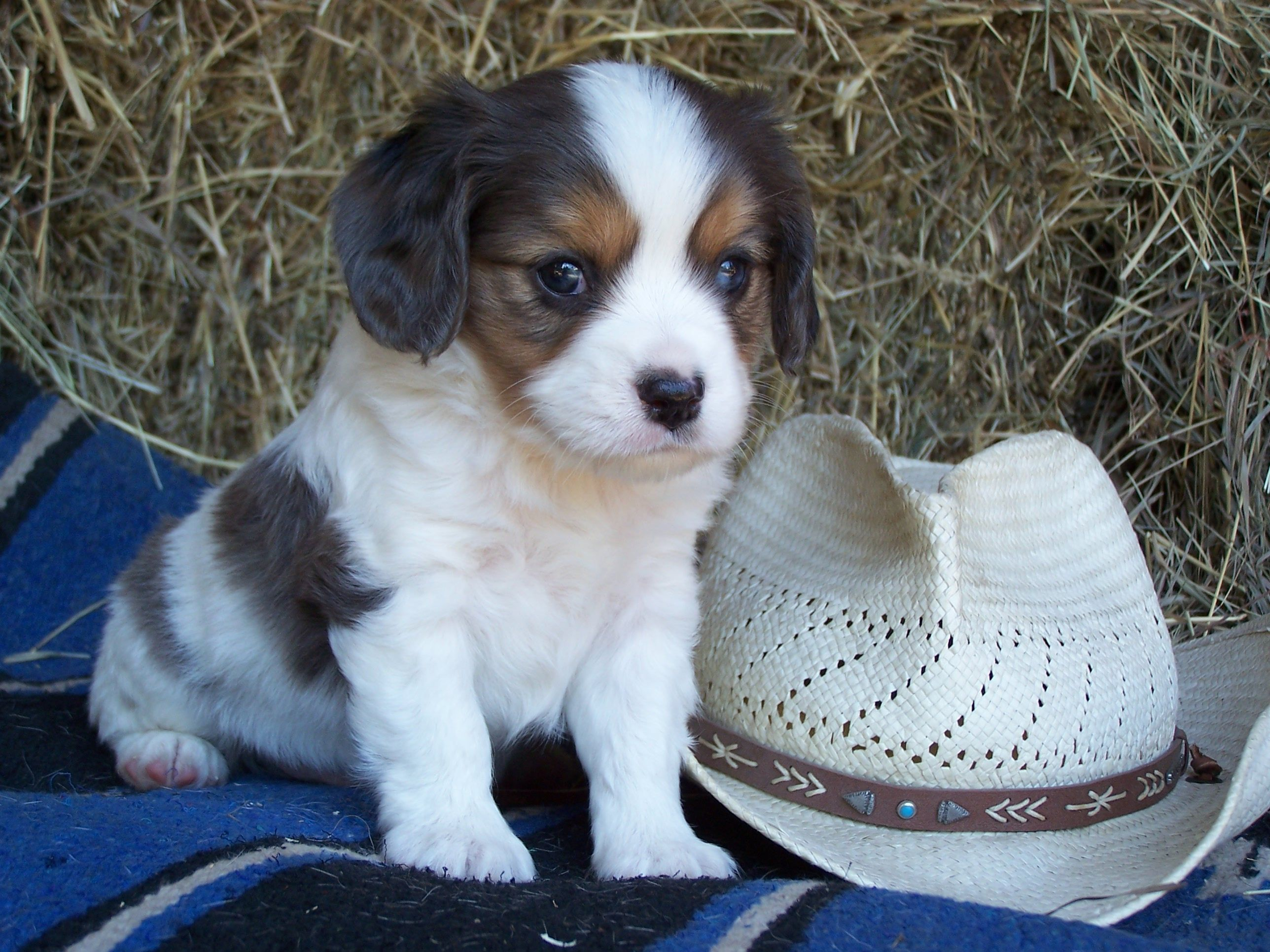 how to pick a puppy from a litter at 6 weeks