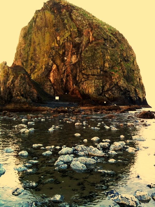 Haystack Rock At Low Tide Cannon Beach Or Cannon Beach Oregon Cannon Beach Beautiful Landscapes