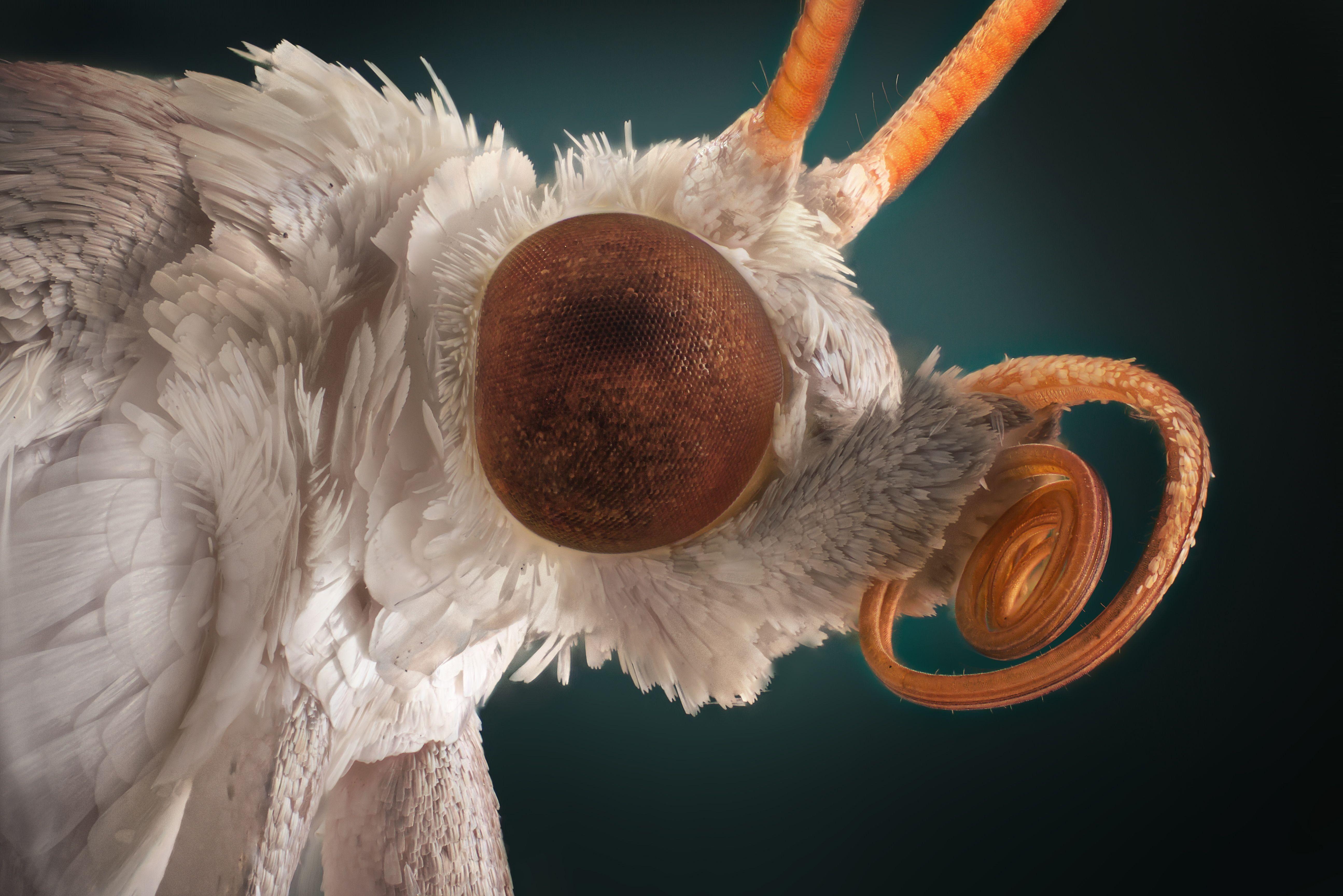 Tiny White Carpet Bugs