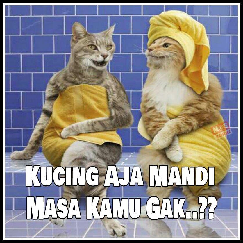 Kucing mandi  LUCU NGAKAK  Humour Memes Cats