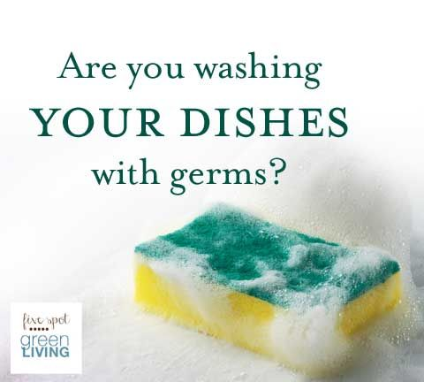 How to Overpower Kitchen Sponge Germs and Microorganisms that ...