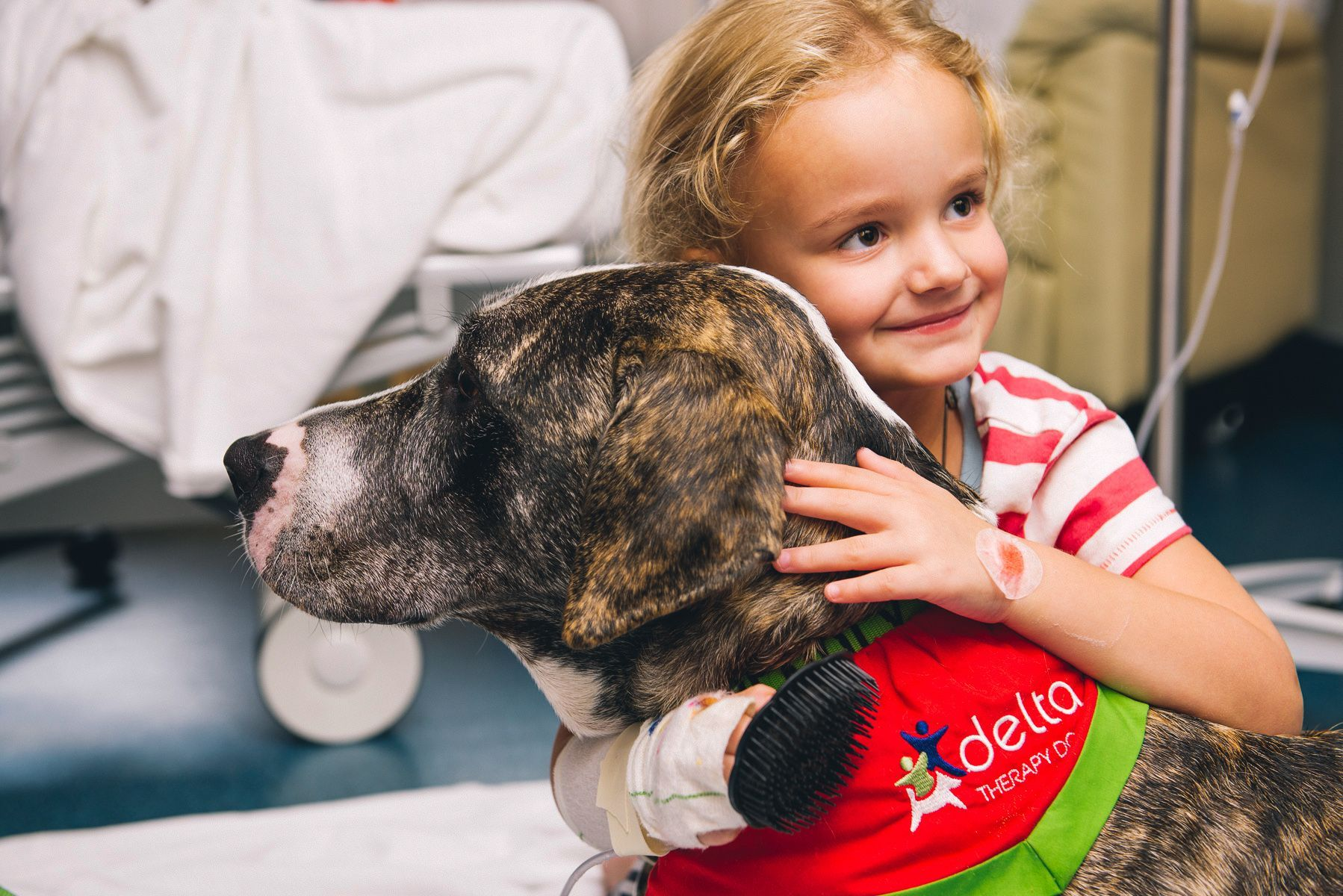 The Best Photos From The Kennel Club S Dog Photographer Of