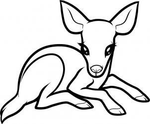 How To Draw A Baby Deer Baby Deer Step 6 Crafts Drawing