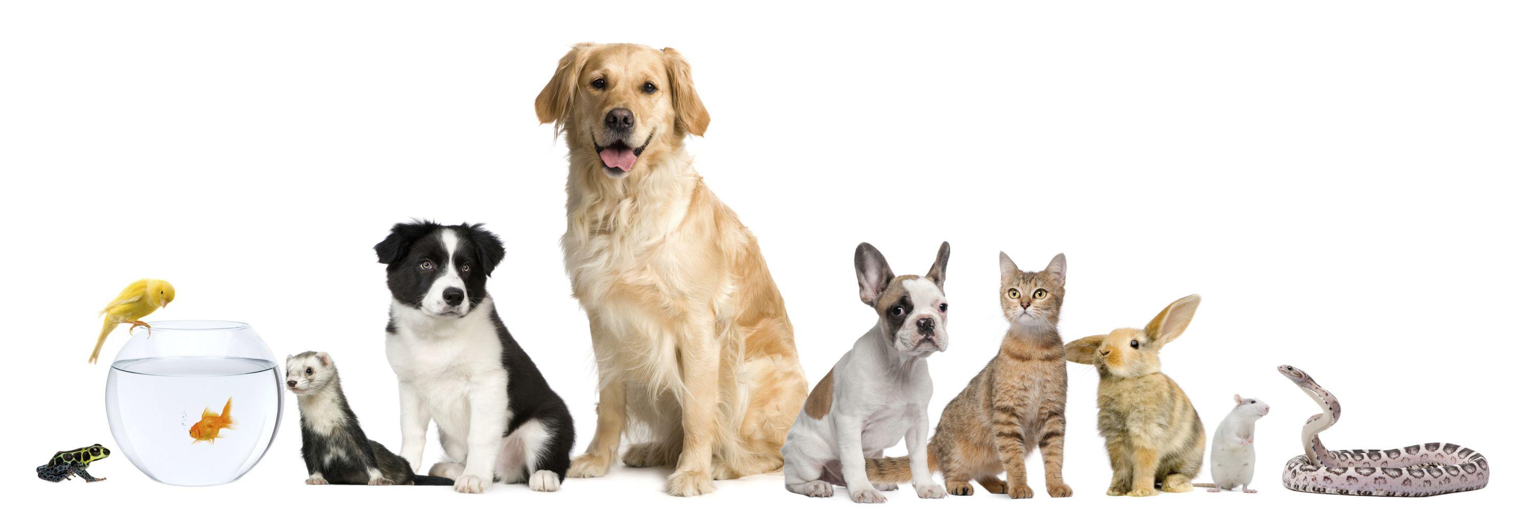 huisdieren afbeeldingen Google zoeken Huisdieren