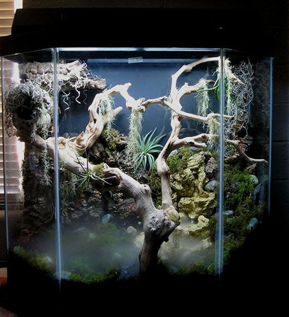 tokay gecko terrarium not my design aquarium fish tank aquascape aquascaping. Black Bedroom Furniture Sets. Home Design Ideas