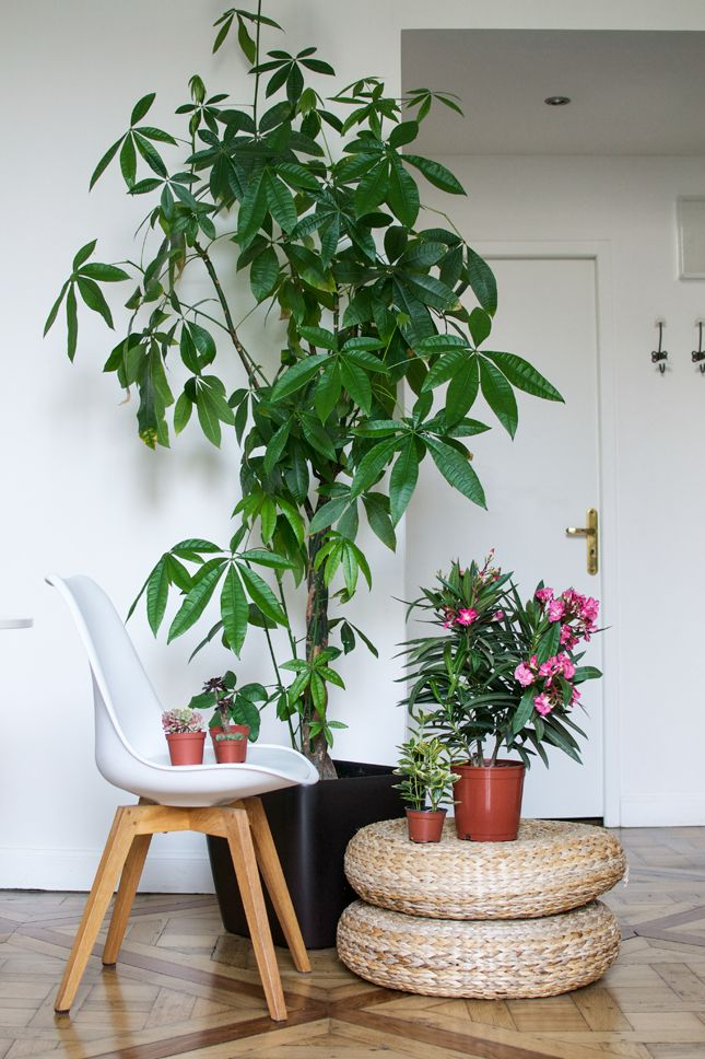 Urban jungle bloggers my plant gang airbnb apartment in Indoor apartment plants